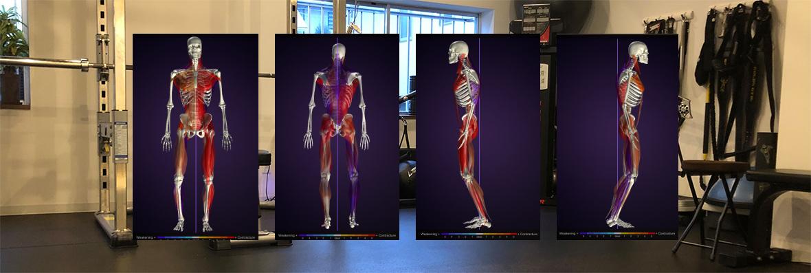 筋肉の短縮、伸長度合い