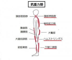 抗重力筋-001