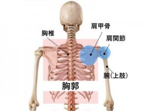 胸椎と胸郭の関係_004-400x300