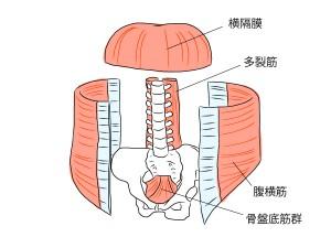 abdominal-cavity