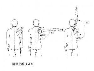 肩甲上腕リズム