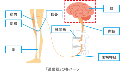 chart_body_02