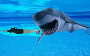 松比良サメ