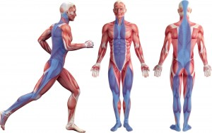 about3-fascia-image